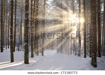 sun and snow in the winter forest landscape - stock photo