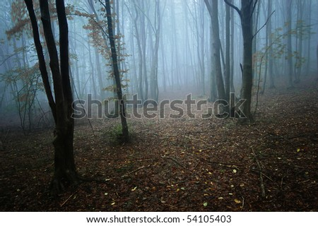 sun beam in a dark forest - stock photo