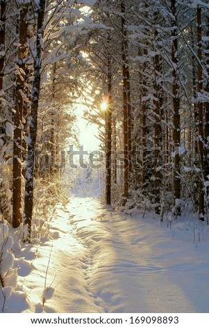 Sun beam in dark winter wood  - stock photo