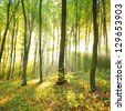 Sun beams pour through trees in foggy forest - stock photo
