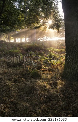Sun beams shining through forest trees in foggy Autumn Fall sunrise landscape - stock photo