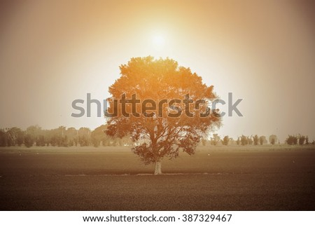 Sun beams thorough trees.lighting from DOD.Silhouette.Addition noise to photo. - stock photo