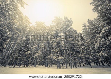 Sun between the clouds above the cold winter forest. - stock photo