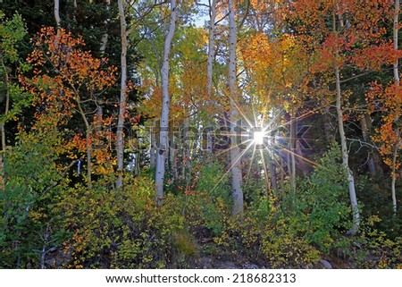 Sun burst in a colorful aspen forest, Utah, USA. - stock photo