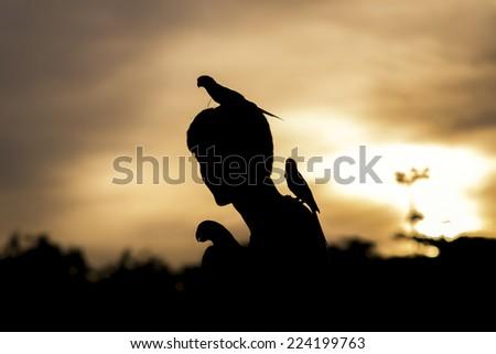 sun Conure Parrot Screaming shadows - stock photo