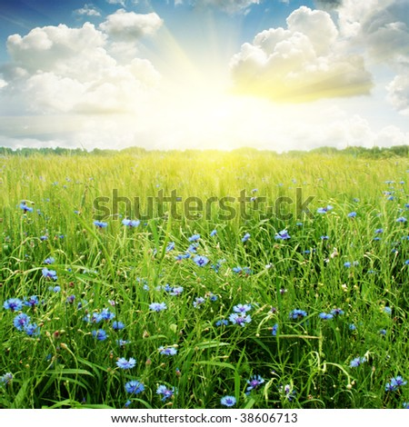 Sun,field and sky with clouds. - stock photo