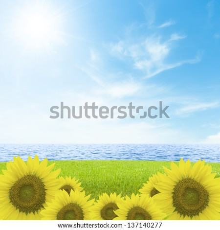 Sun flower on green grass field. - stock photo