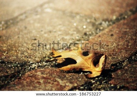 Sun glow on the mourning oak leaf - stock photo