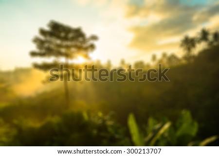 Sun is rising above lush jungle - stock photo