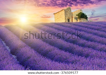 Sun is setting over a beautiful purple lavender filed in Valensole. Provence, France - stock photo