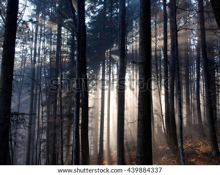 sun ray's in misty winter morning - stock photo