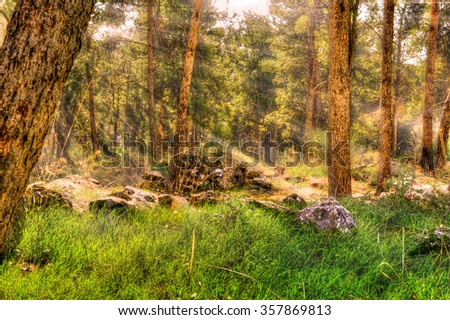 Sun rays lit, after a small rain  forest thicket and covered glade - stock photo