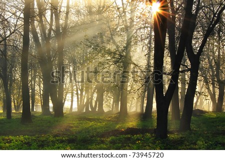Sun rays pass through the mist in the forest - stock photo