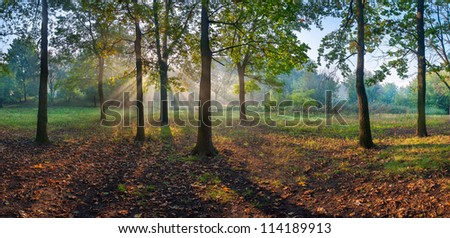 Sun rays shining through branches of trees in the oak wood, panorama - stock photo