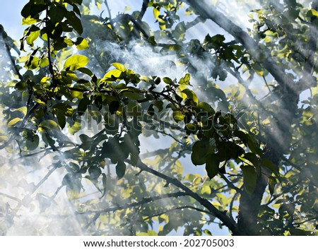 sun rays shining through tree branches in the garden - stock photo