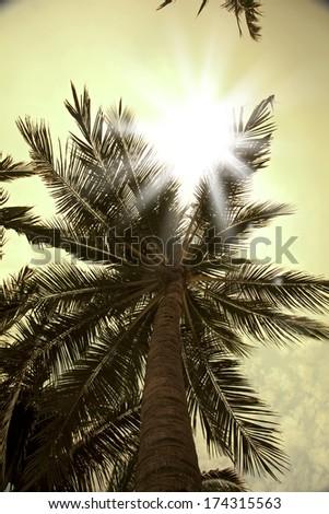 Sun rays through palm trees - stock photo