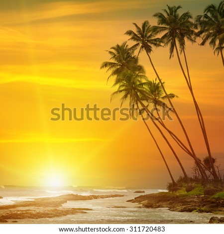 sun rise, tropical palm trees and ocean - stock photo