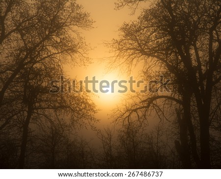 Sun rising through heavy fog, surrounded by trees in early spring, in rich sepia tone - stock photo