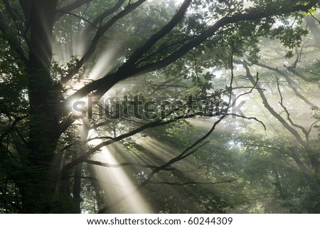 Sun's rays penetrate through the fog and the trees - stock photo