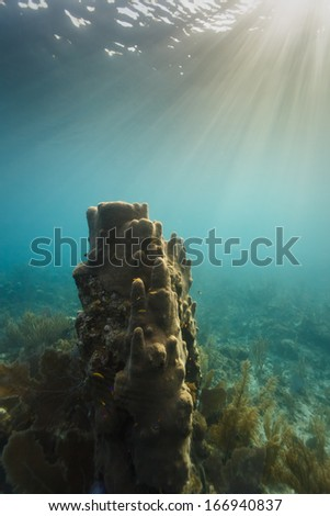 Sun's rays point to giant tube sponge growing on the coral reef off coast of Belize - stock photo