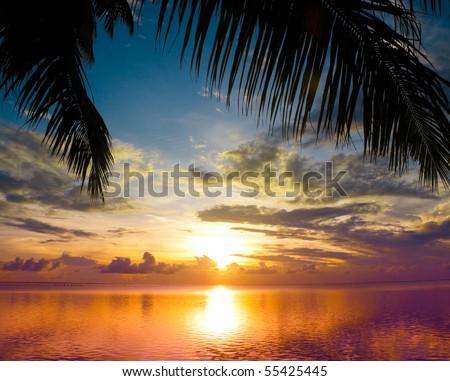 Sun sets between Palms - stock photo
