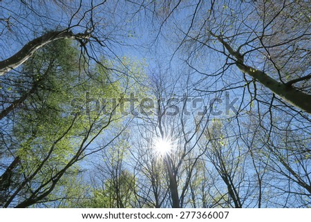 Sun shines through branches of trees in park - stock photo