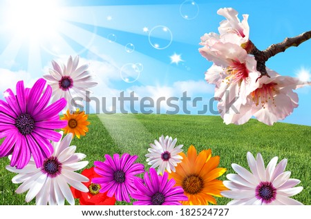 Sun shining beams over the green field and blossom spring floral magic background  - stock photo