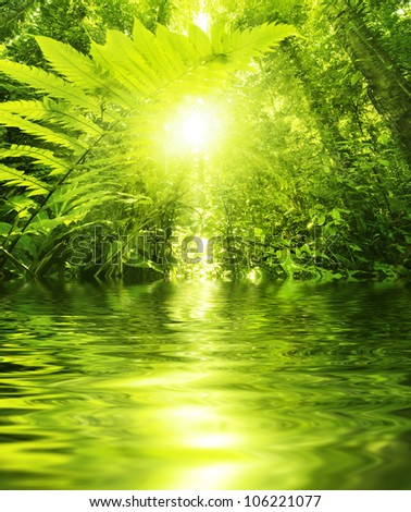 Sun shining into tropical forest, low angle view with water reflection - stock photo