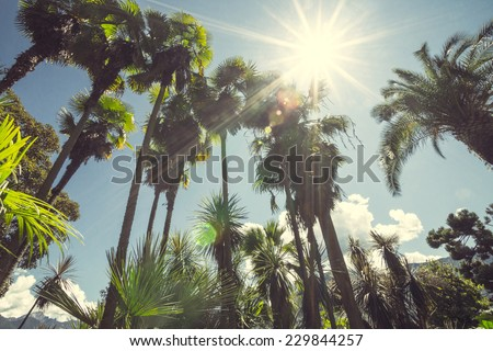 Sun shining through tall palm trees. Summer, fashion, travel, vacation, tourism, lifestyle and weather concept.   - stock photo