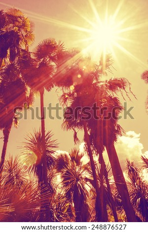 Sun shining through tall palm trees. Vertical shot. Summer, fashion, travel, vacation, tourism, lifestyle and weather concept. - stock photo