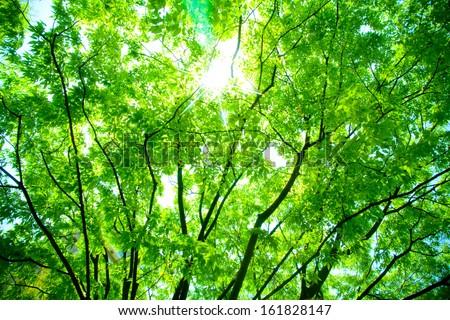 Sun shining through tree branches - stock photo