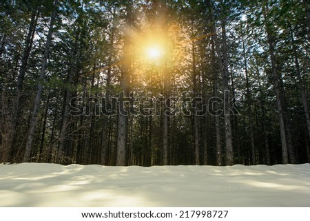 sunbeams behind the trees and snowy field  - stock photo