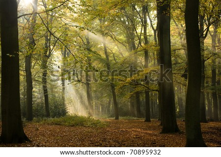 Sunbeams between the trees in wood - stock photo