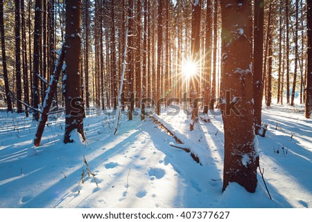 Sunbeams breaking through winter pine tree forest, straight blue shadows of trees on fluffy snow.  - stock photo