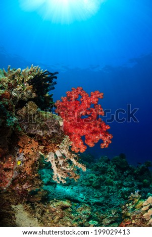 Sunbeams illuminating colorful soft corals on a tropical reef - stock photo