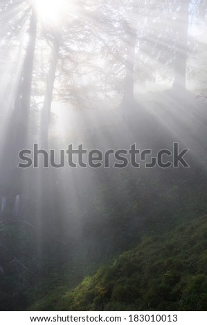 Sunbeams in a foggy forest - stock photo