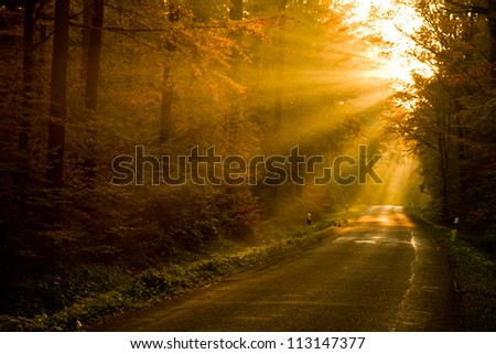 sunbeams in colorful autumn forest - stock photo