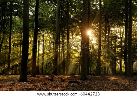Sunbeams in forest at early fall - stock photo