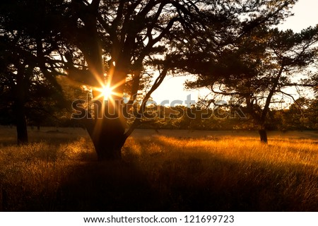 sunbeams in sunset through tree in savannah - stock photo