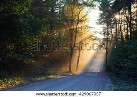 sunbeams in the dark forest  - stock photo