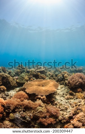 Sunbeams on a tropical coral reef - stock photo