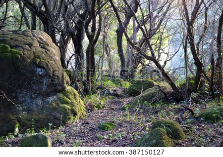 Sunbeams through trees in the forest - stock photo