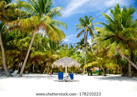 Sunbeds and palms on a very nice beach - stock photo