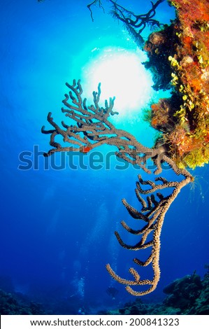 Sunburst with Coral Reef, Grand Cayman - stock photo