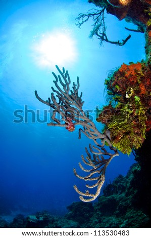 Sunburst with Coral Reef in foreground - stock photo