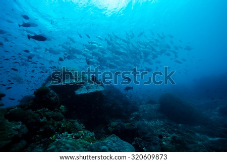 sunfish under the sea - stock photo