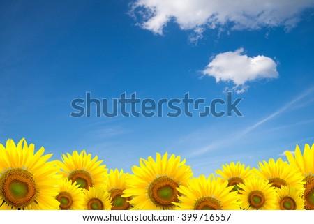 Sunflower Background for presentation/Sunflower Background/Sunflower - stock photo