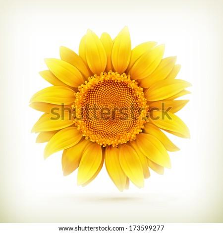 Sunflower, bitmap copy - stock photo