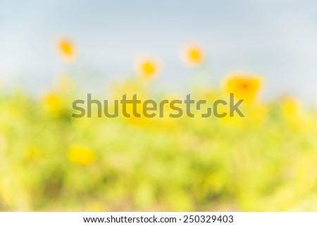 Sunflower blur background. - stock photo