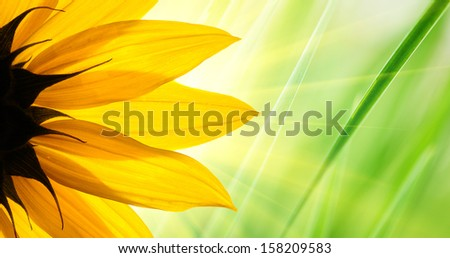 Sunflower flower over over green floral background - stock photo